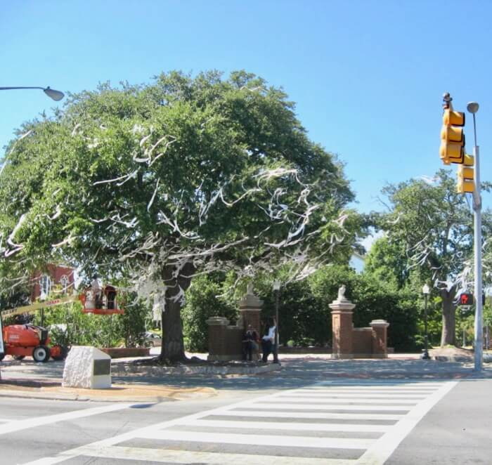 Auburn oak trees with toliet paper remains at Toomer's Corner