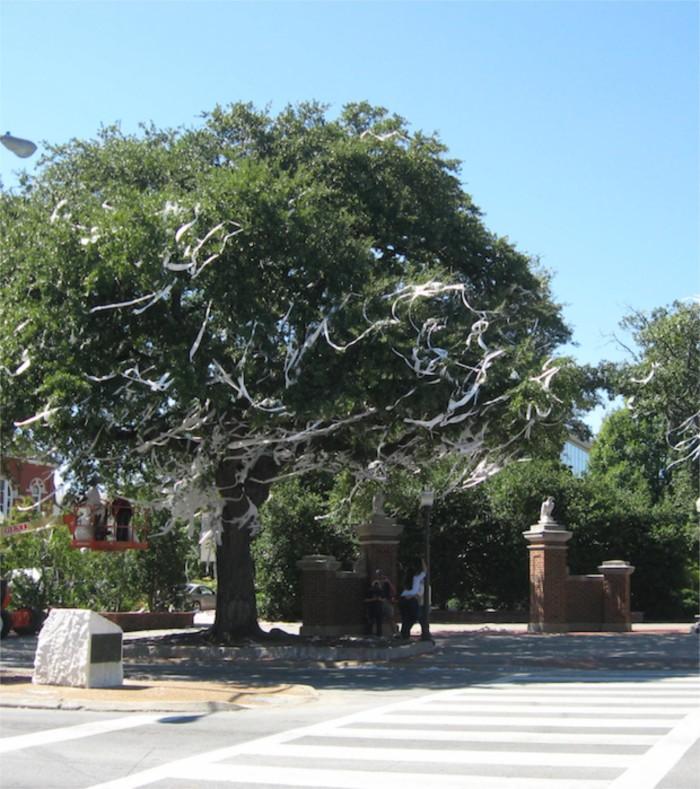 Auburn Oak Trees Toomer's Corner photo by Kathy Miller