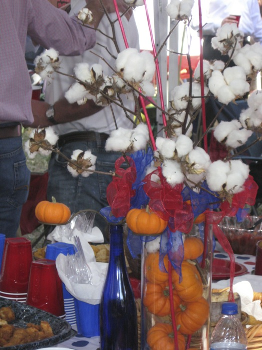 Pumpkins and Cotton at Ole Miss photo by Kathy Miller