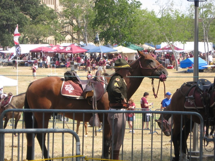 Horses ready for Texas A&M game photo by Kathy Miller