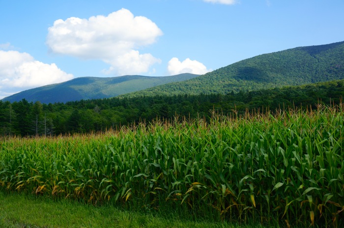 Vermont Green Mountains with cornfields in valley photo by Kathy Miller