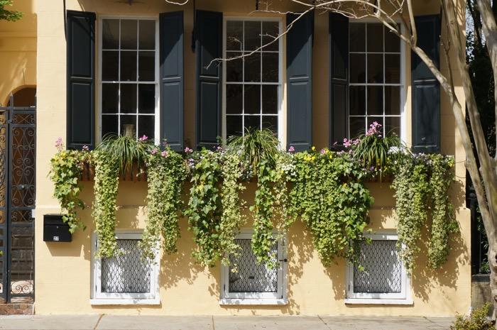 Triple window box in Charleston photo by Kathy Miller