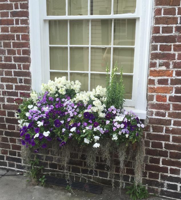 Window box and Charleston brick laying photo by Kathy Miller