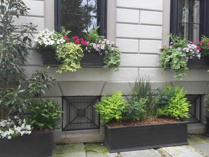 Charleston Window Boxes with iron grates photo by Kathy Miller