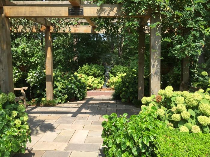 Green hydrangeas in Duke Gardens photo by Kathy Miller