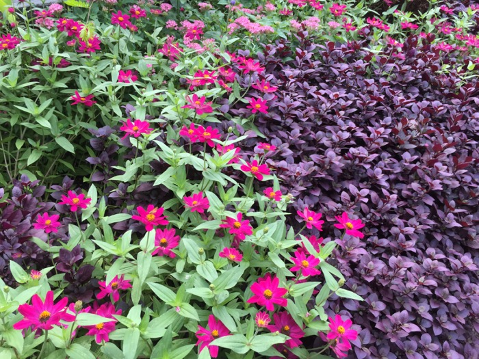 Color in the Duke Garden Duke University photo by Kathy Miller
