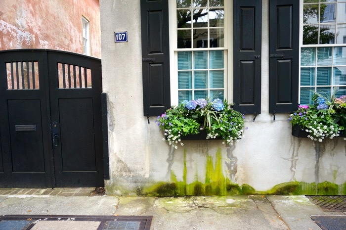 Charleston SC window boxes photo by Kathy Miller