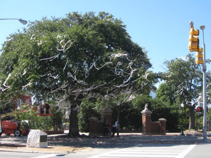 Oak Trees at Auburn with a hint of toliet paper photo by Kathy Miller