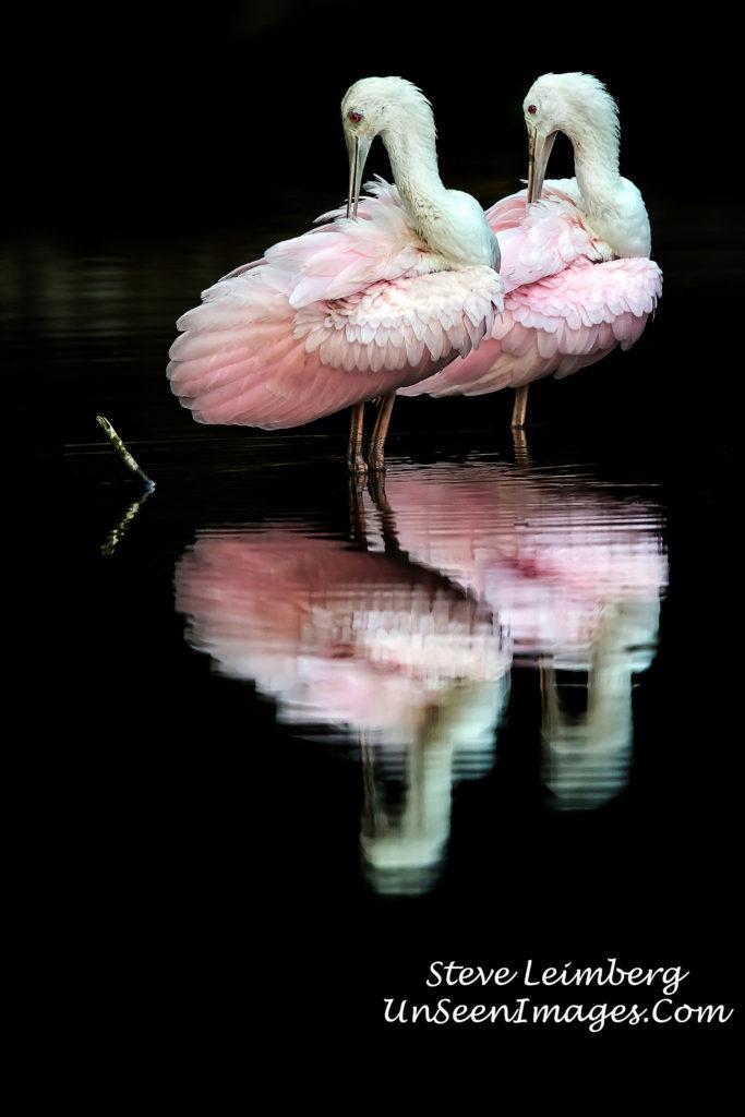 Roseate Ballet photograph by Steve Leimberg