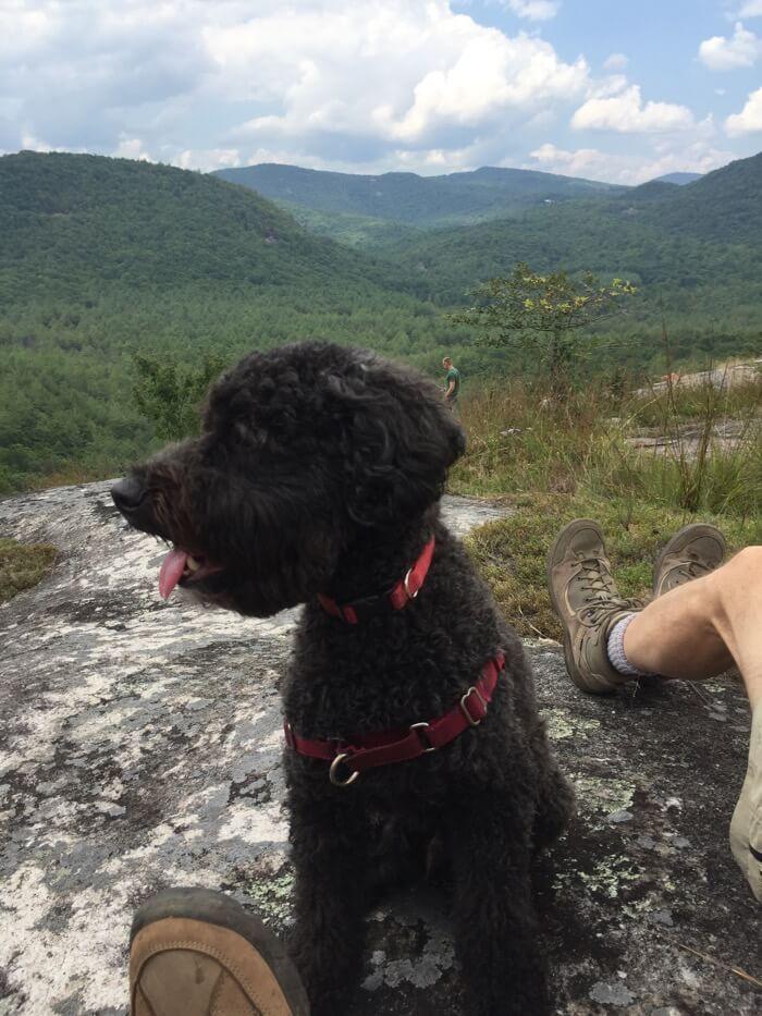Sheldon enjoys Little Green Mountain photo by Kathy Miller