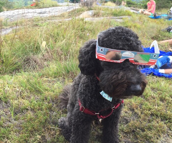 Sheldon with his eclipse glasses photo by Kathy Miller