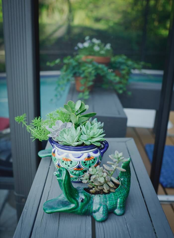Succulents in cute pots photo by Page Tehan