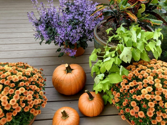 Fall Decorations photo by Kathy Miller