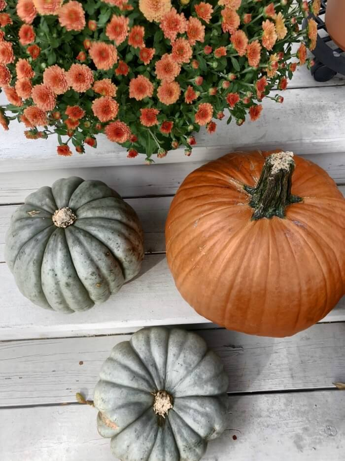 Pumpkin fun photo by Kathy Miller