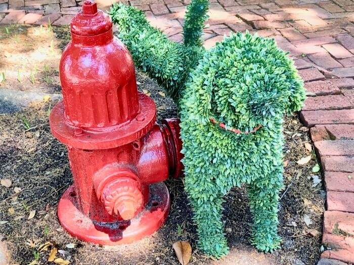 Dog and the fire hydrant photo by Kathy Miller