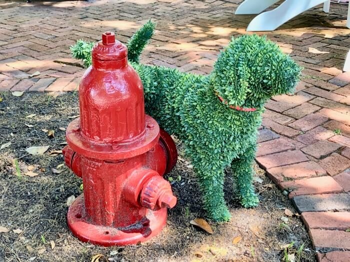 Dog and his fire hydrant photo by Kathy Miller