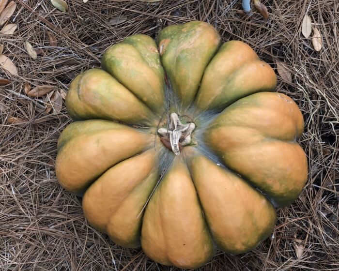 Fall heirloom pumpkin photo by Kathy Miller